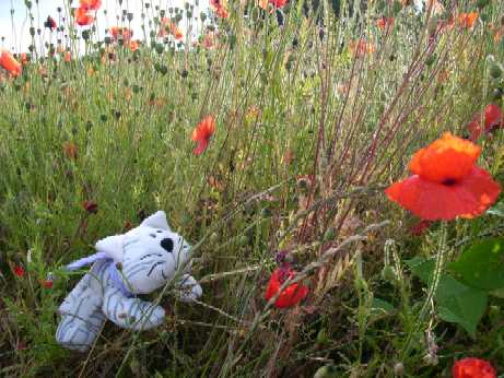 Medium - Poppy Field - PG 3.JPG