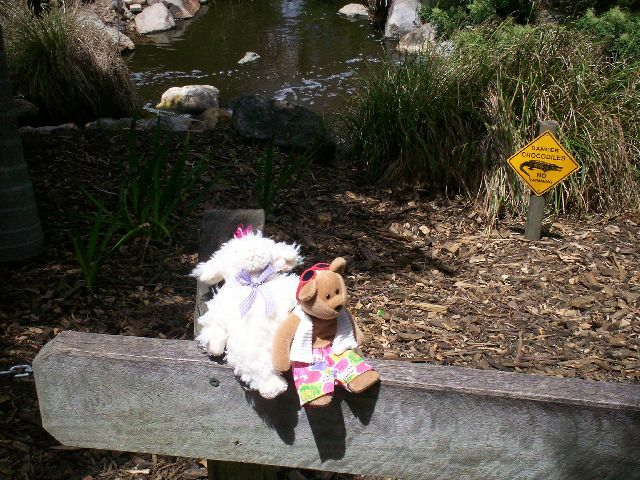 Shirley Sheep and Cool Jules go to the native animal reserve..jpg